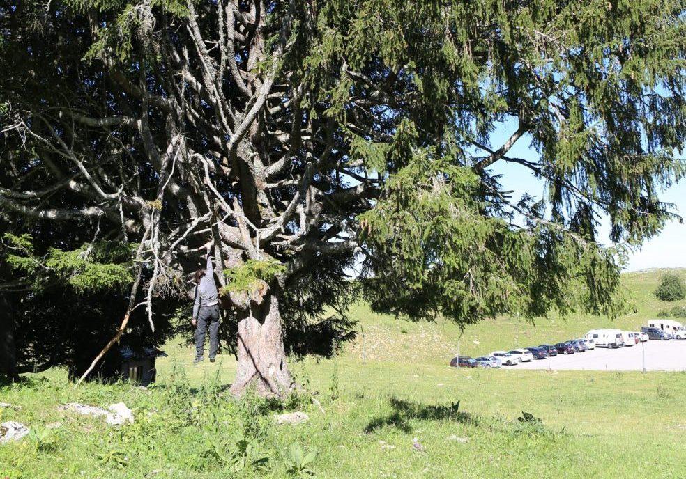 La fatigue de l'arbre